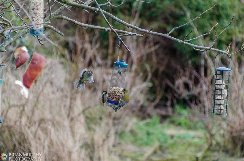 Birds 050218-1.jpg