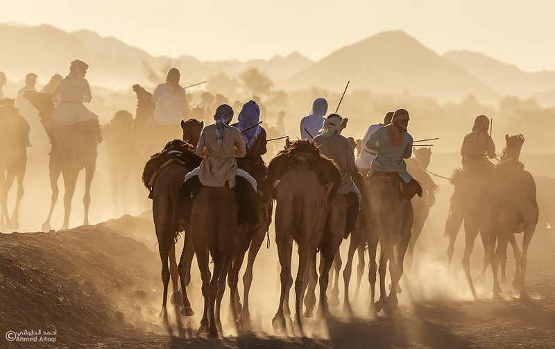 IMGL8904-1- Camel Race.jpg