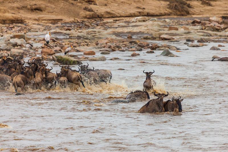 North_Serengeti-46.jpg