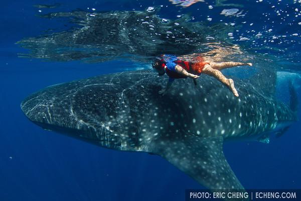 Whale Sharks, Isla Mujeres