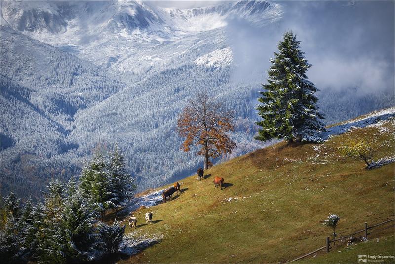 Carpathians | Карпаты
