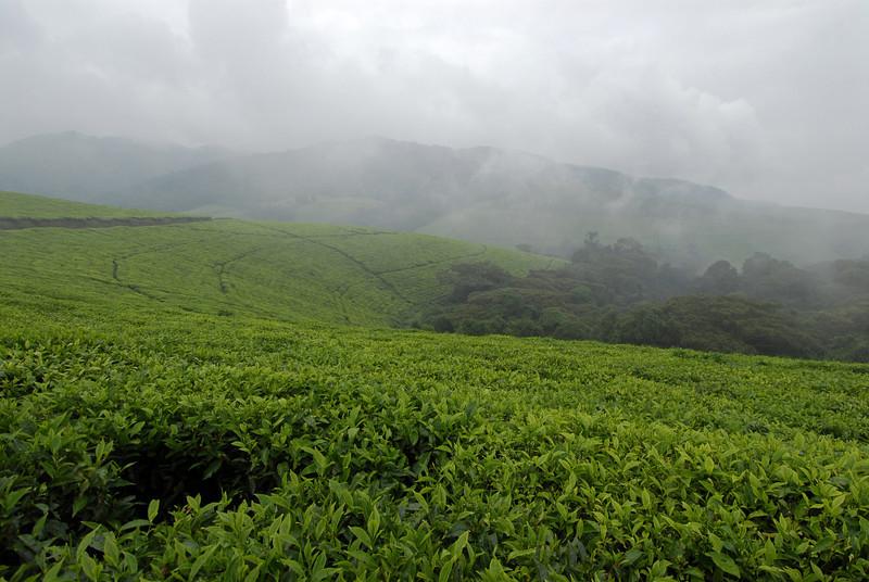 070113 3998 Burundi - Teza Mountains and Tea fields _E _L ~E ~L.JPG