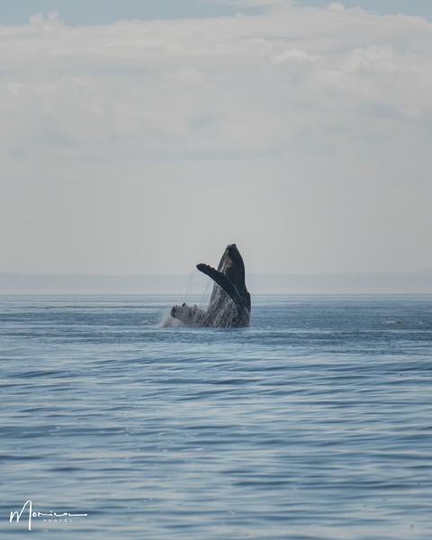 2019-08-31 - Whale Watching-0625_edit.jpg