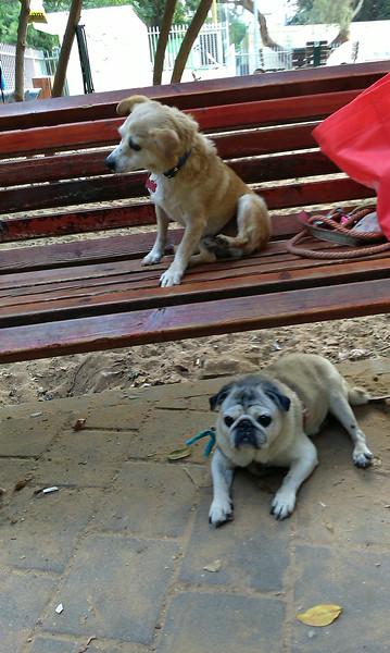 Doggie Parks