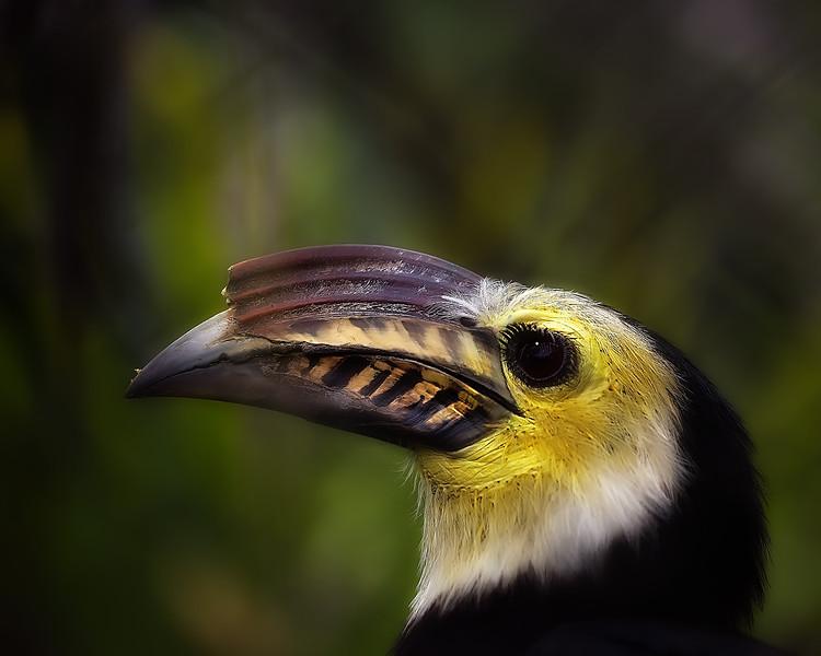 bird_NEAT-projects-copy.jpg