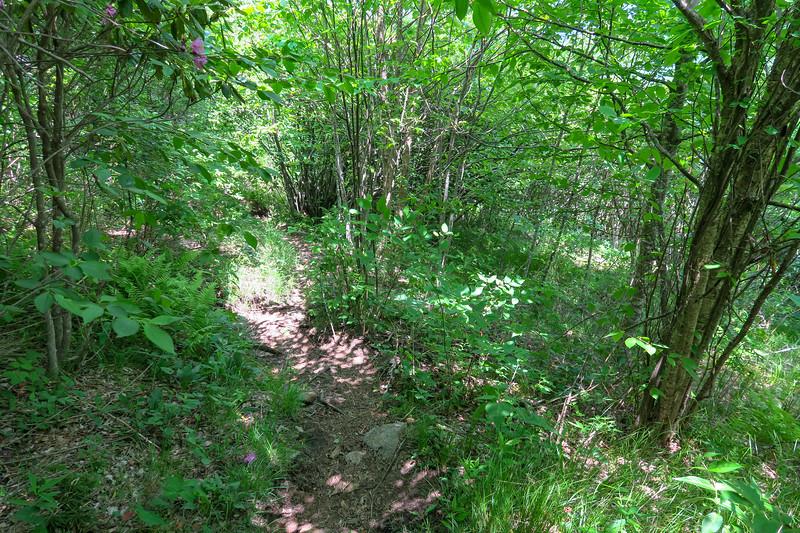 Greasy Cove Trail -- 5,450'
