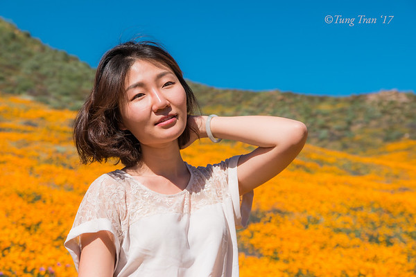 At Poppies Field - L - Res