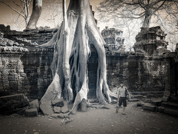 Ta Prohm and Banteay Srei Infrared