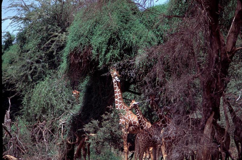 Kenya1_061.jpg
