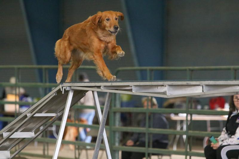 3-10-2019 Bloodhound-0268.jpg