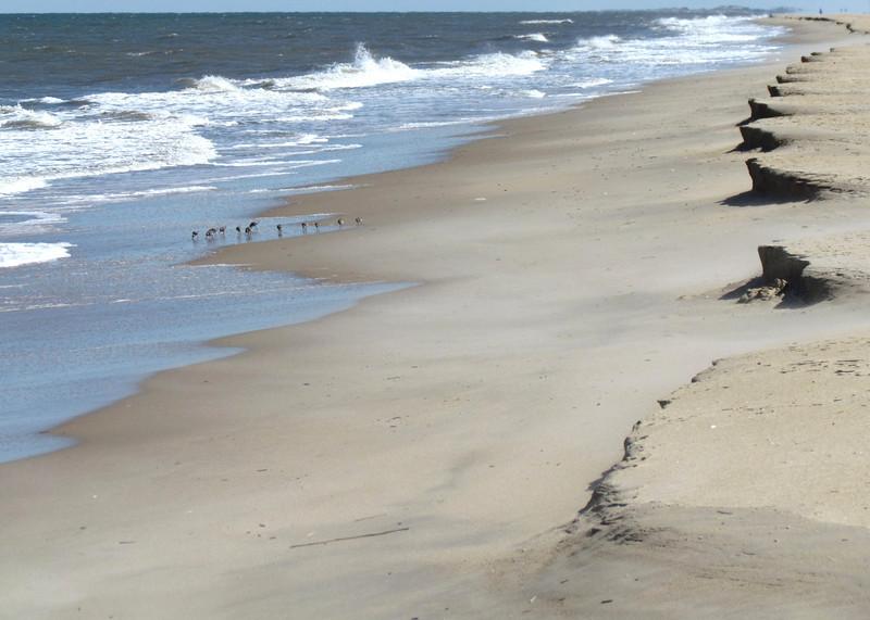 Dam Neck Beach (23).jpg