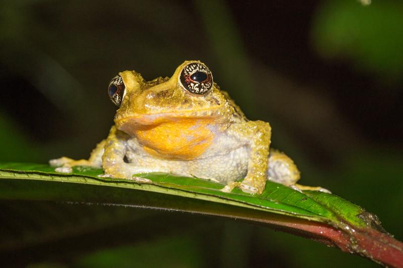 Biodiversity Group, DSC00329