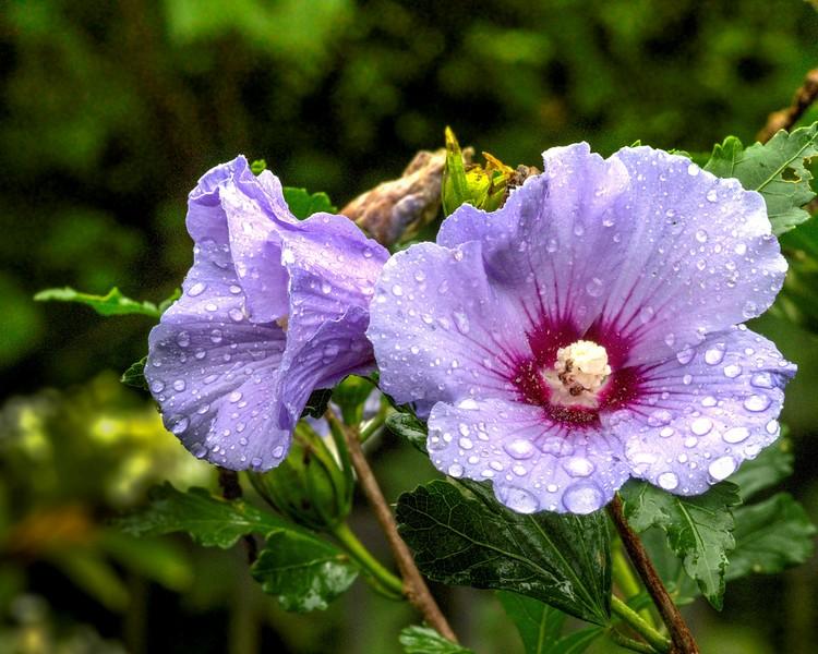 Garden 1, 058.jpg