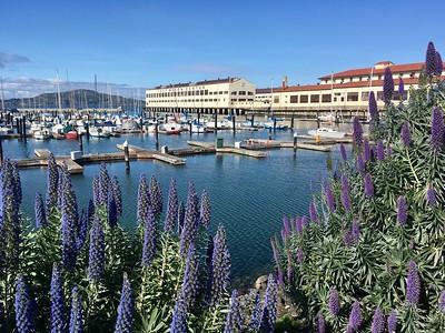 USA chapter: San Francisco life'20