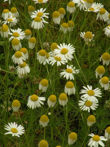 Colorado 2010 - Landscape/Wildlife