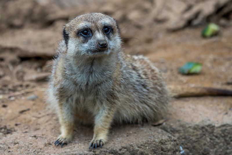 Zoo Trip 15 November 2020