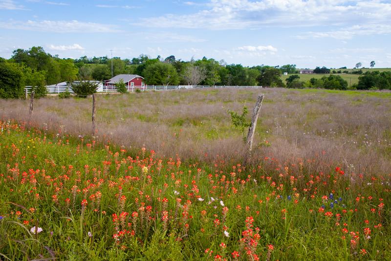 2016_4_9 Texas Wildflower Shoot-8779.jpg