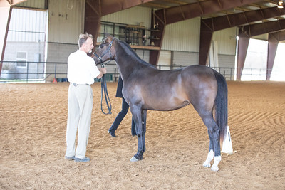 Horse 488