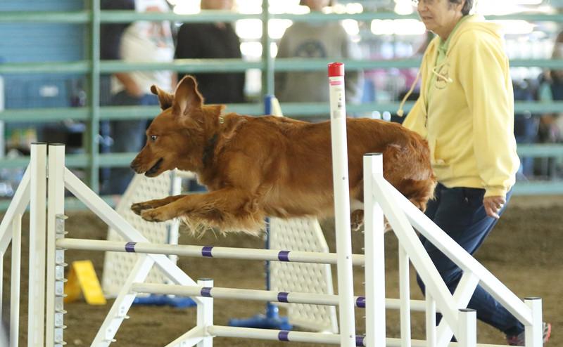 10-31-2015 Border Terrier-2411.jpg