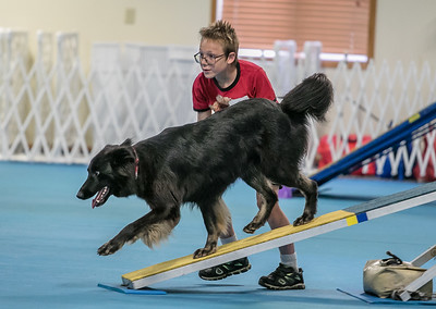 2017 State 4H Agility_Off Leash