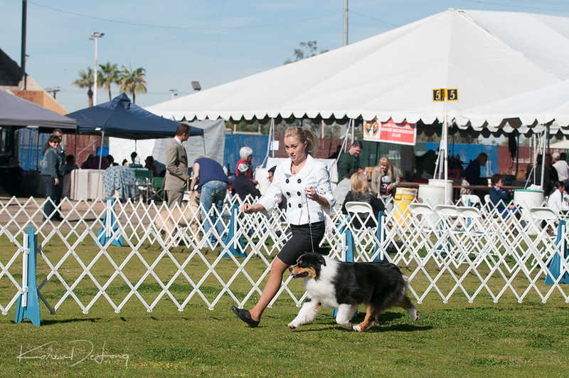 20170205_Australian Shepherds_Lost Dutchman Kennel Club-28.jpg