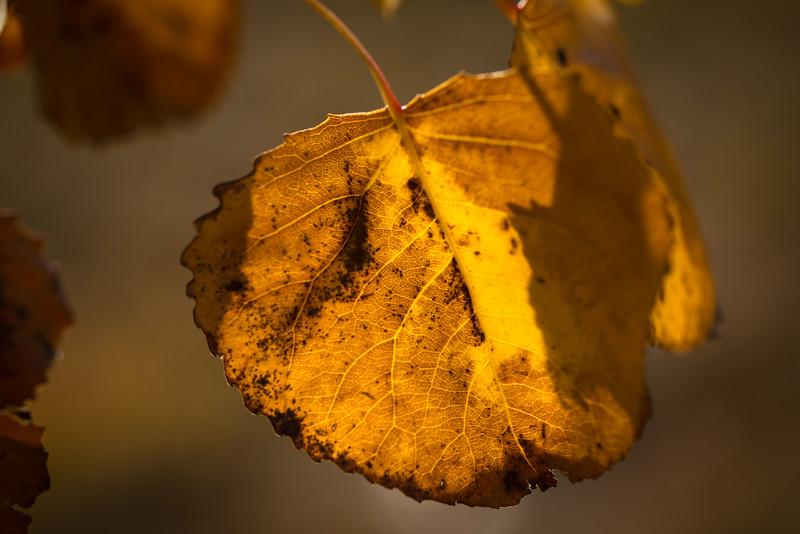 20151024-Fall Colors-19.jpg