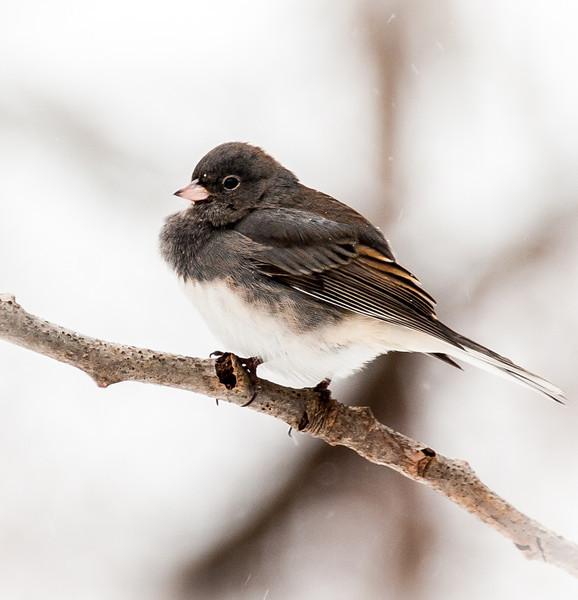bird 4x6.jpg