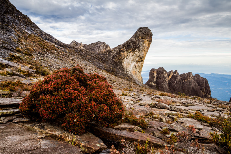 Plants on western plateau of Mount Kinabalu, Borneo. Behind stands Oyayubi Iwu Peak 'the thumb' (3975.8 m) and the pinnacles.