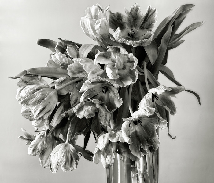 bouquet of parrot tulips