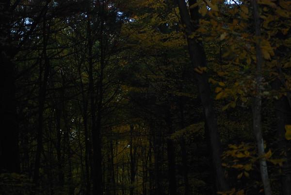 Leah Fall Walk 10/19/16