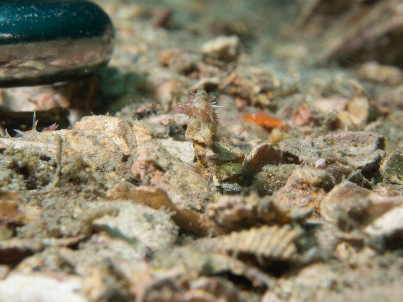 Reef BHB 2016-7080124.jpg