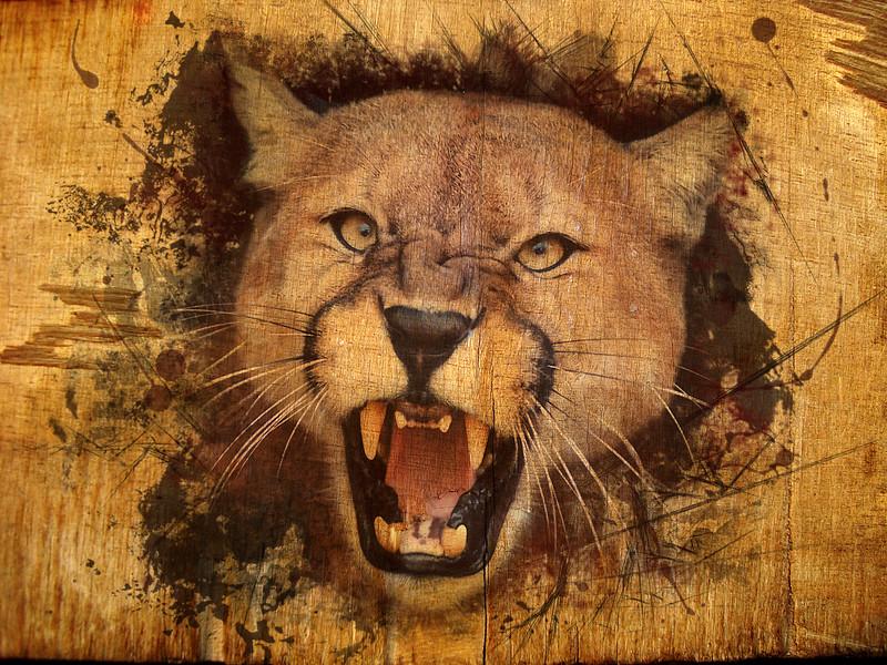 cougar wood.jpg