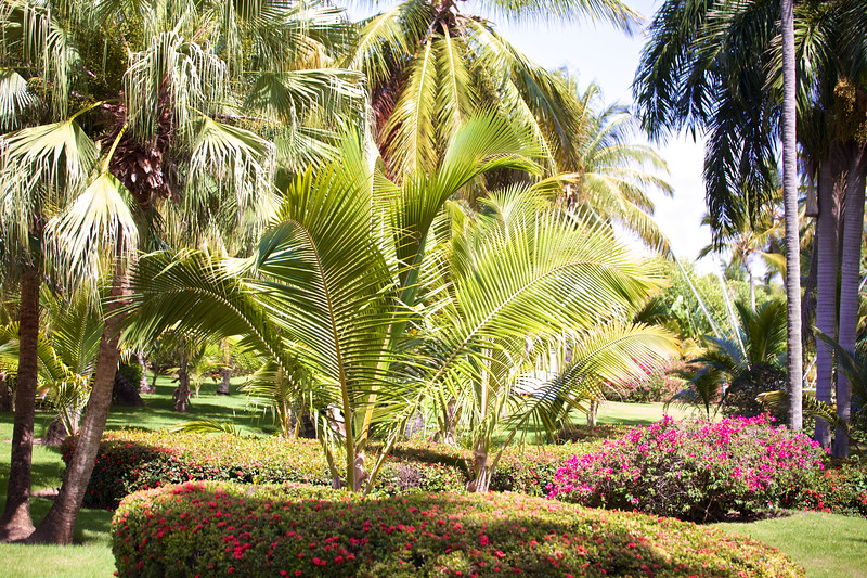 Punta Cana  2014-06-14 325.jpg