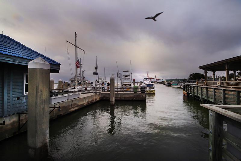 Dock with bird flying.jpg