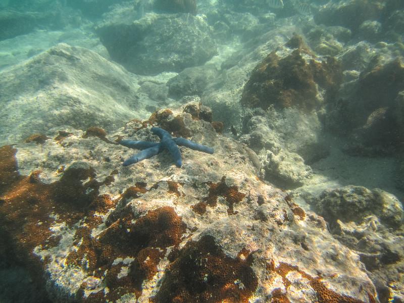 Rarotonga-Cook-Islands-2014-9.jpg