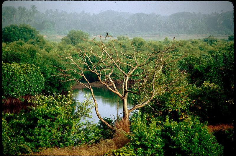 India1_011.jpg