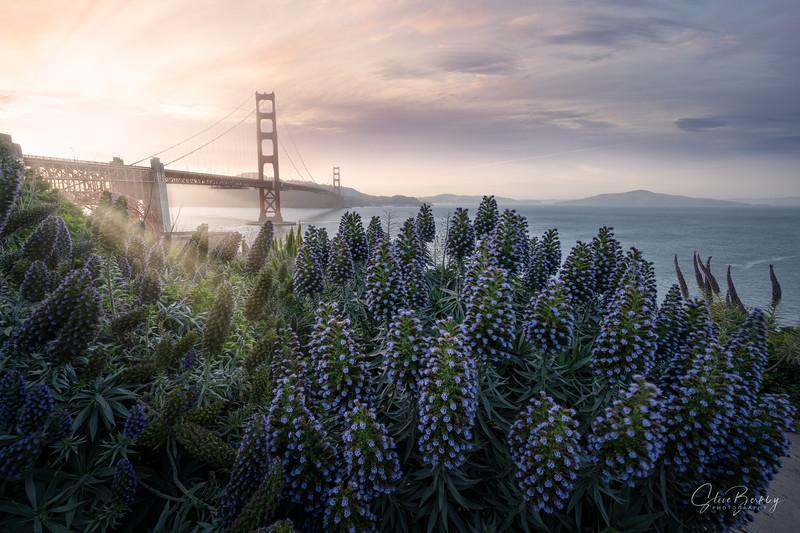 Golden Gate at the Presidio II