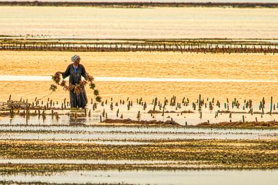 Zanzibar Seaweed Fields