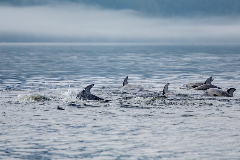 150910_Dolphin_3917.jpg