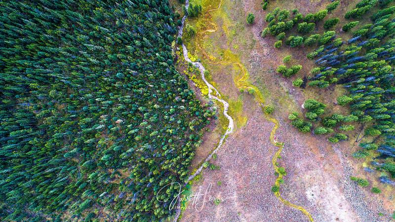 DroneTrees.Web.jpg-0023.jpg
