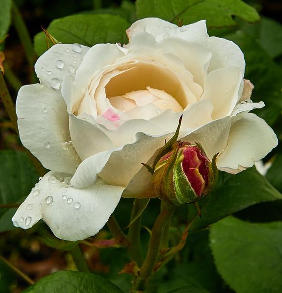 Flowers-5438.jpg