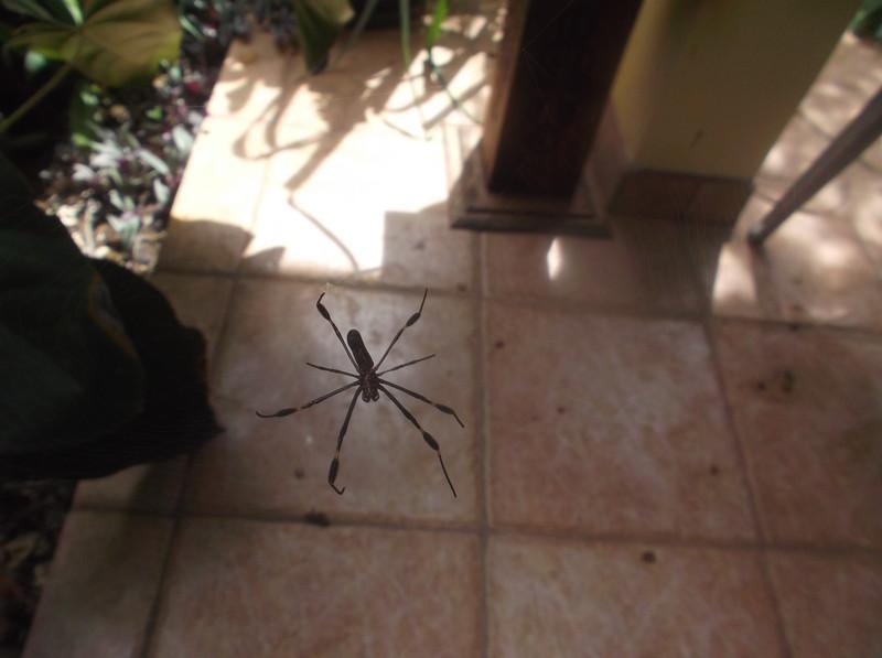CR_NEGATIVES_Bugs_SpiderBig.jpg