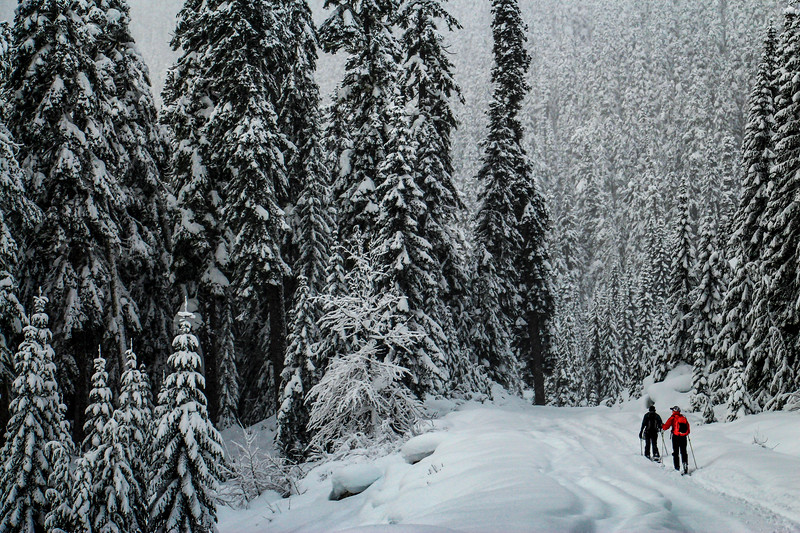 skiing-skitouring-backcountry-nature-pnw-snow-winter-friends.jpg