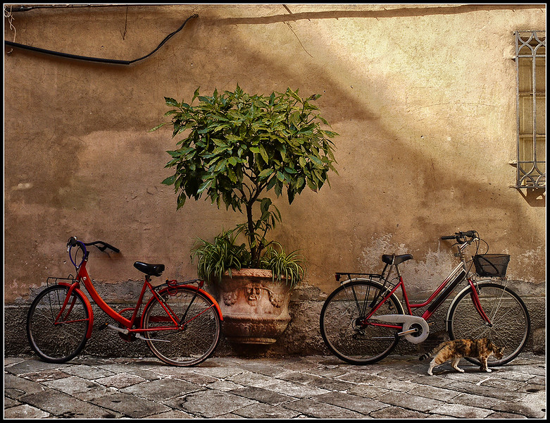 2010-09-Lucca-583.jpg