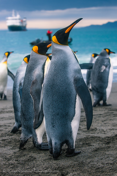 Antarctic-111