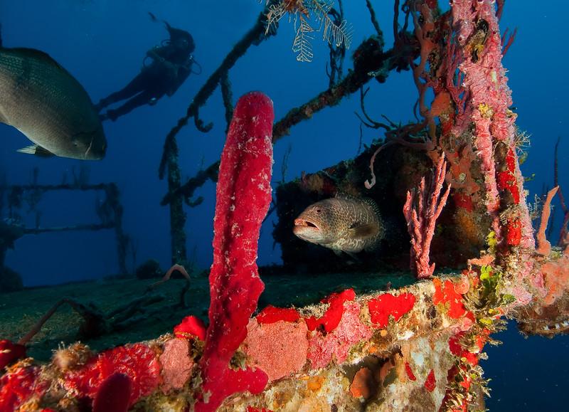 Several fish call this old sunken ship home. Utila, Honduras.