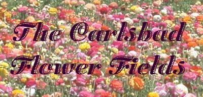 Carlsbad Flower Fields - April 2002
