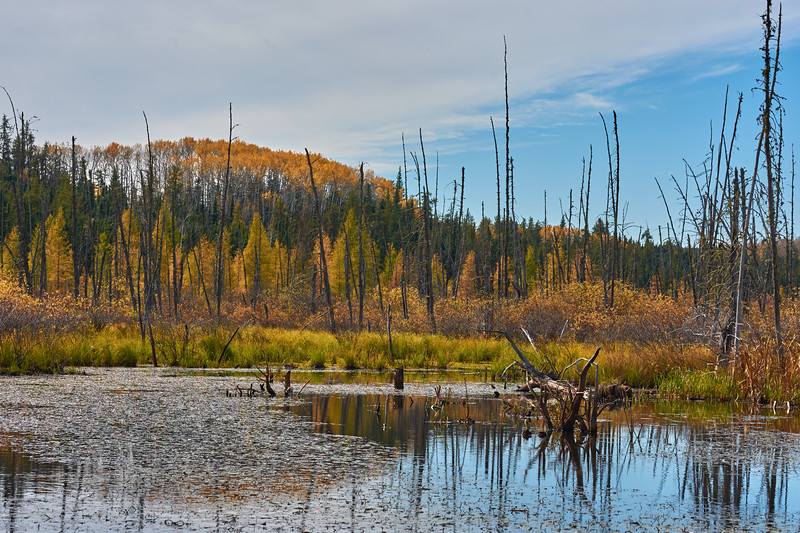 Northern Marsh