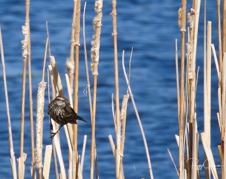 Birds of Arizona and Southwest