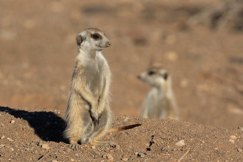 Namibia E4A3664.jpg